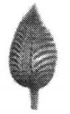 19-1104
